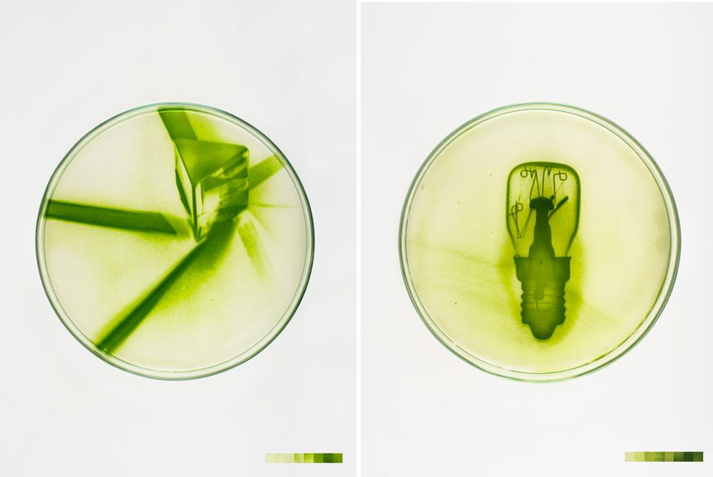 Lia Giraud: Algae-Graphies